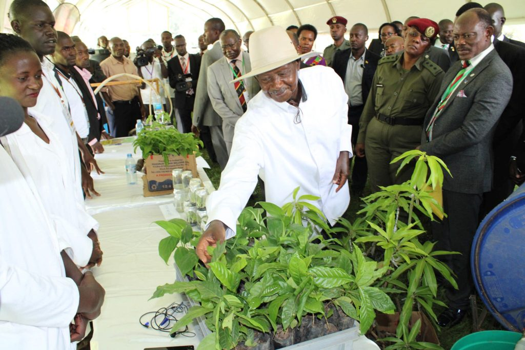 - President Yoweri Museveni at the tissue culture stall during the Makerere University Agricultural Day and Exhibition